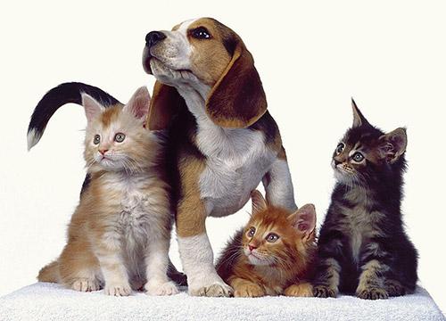 Дезинфицирующие средства для ветеринарии